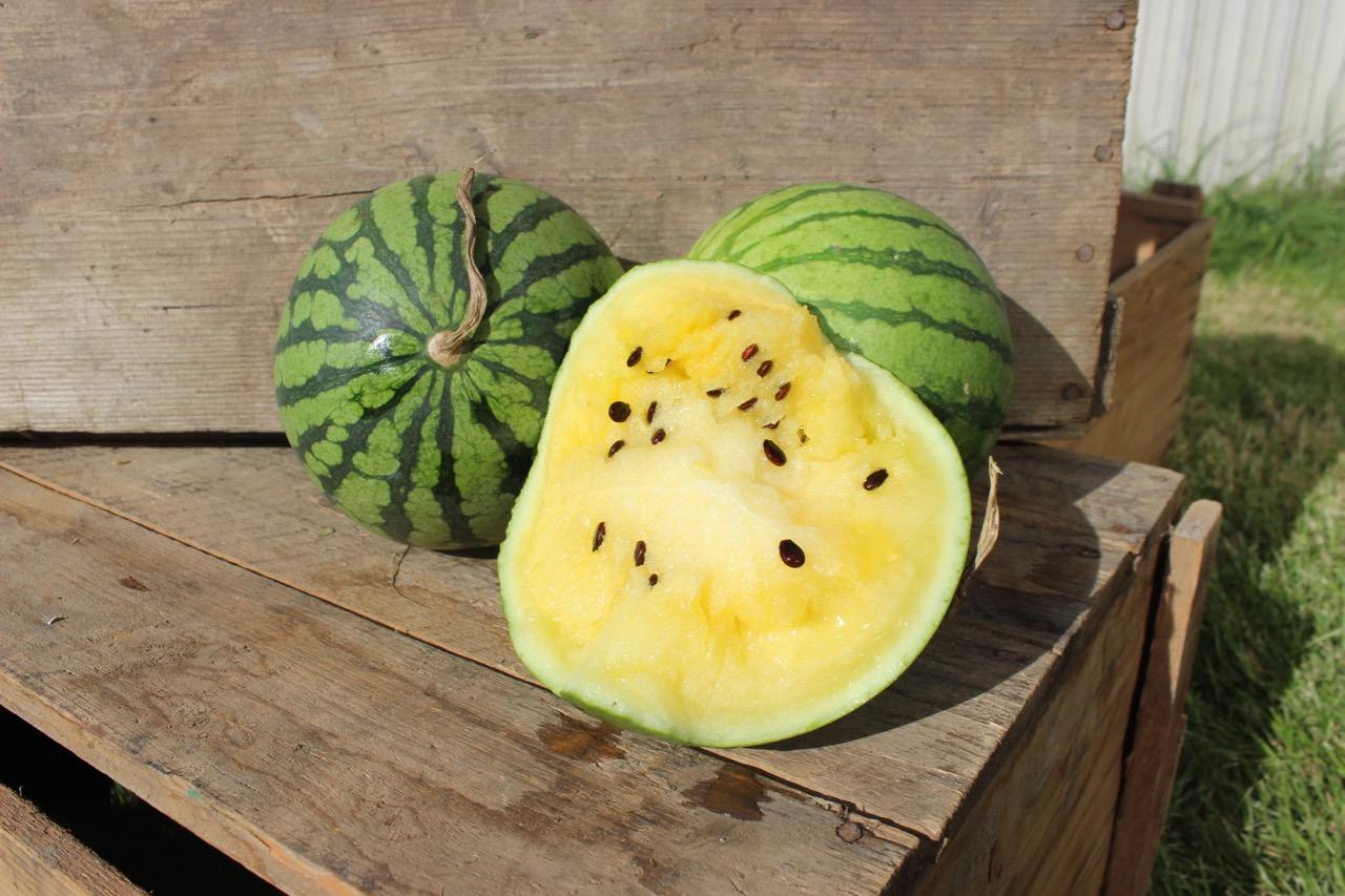Melon jaune Image