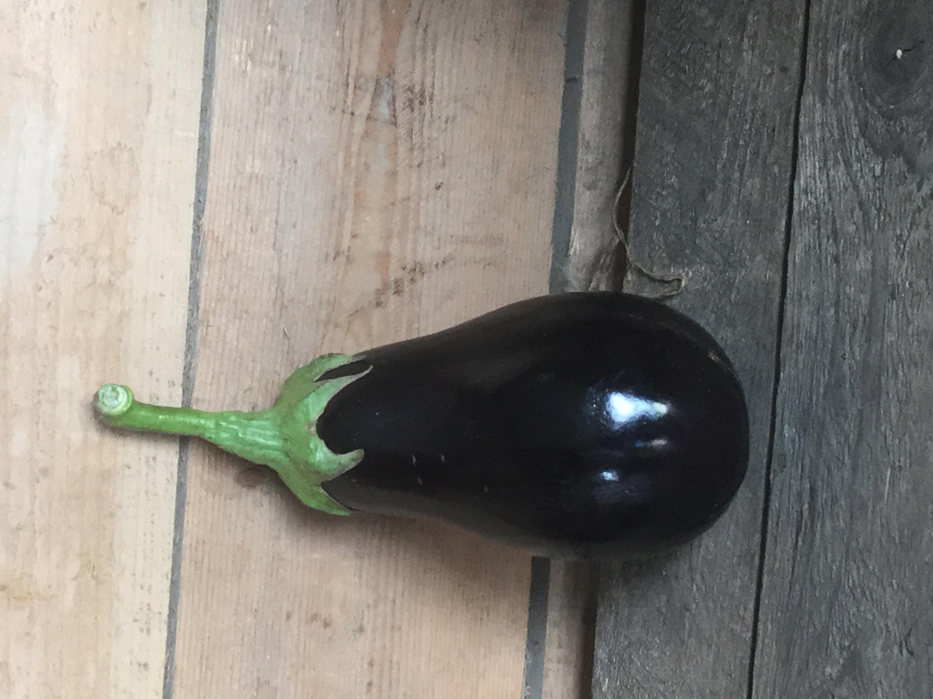 Aubergine noire Image